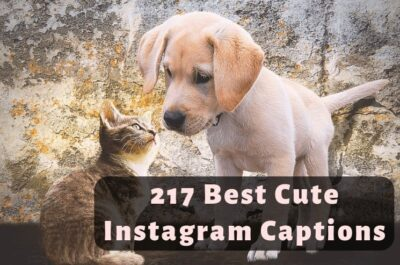 217 Cute Instagram Captions You Should Use