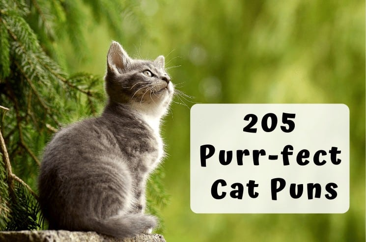 205 Best Cat Puns That Are Simply Paw-some! 1