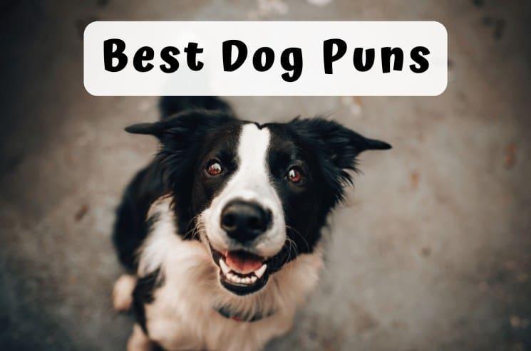 193 Best Dog Puns