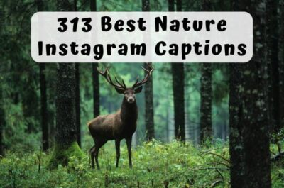 313 Best Instagram Captions for Nature Photos