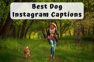 235 Best Dog Captions for Instagram